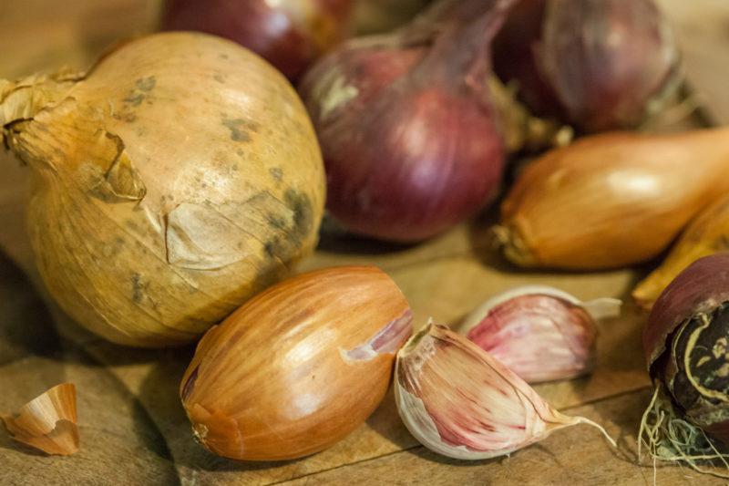 legumes bulbes 1